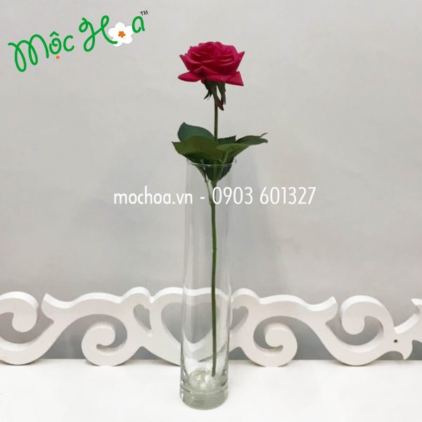 2 hồng cao su