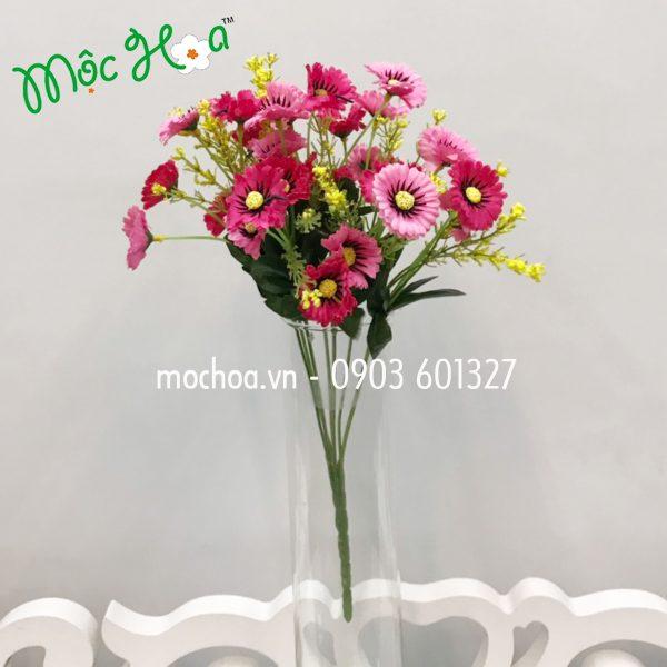 Hoa cúc mi 35k (1)